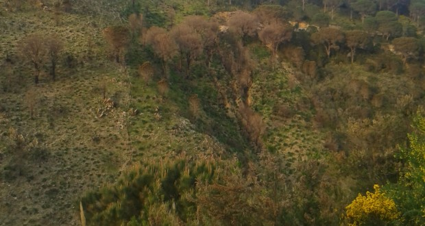 Fuoco e erosione. Salvare la natura significa prevenire le catastrofi: l'importanza dei Vigili del Fuoco